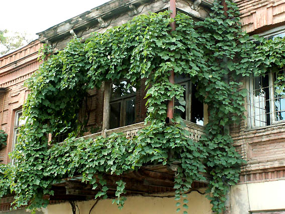 kak-podobrat-cveti-dlya-balkona (1)570b4dcde27a1
