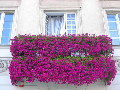 kak-podobrat-cveti-dlya-balkona (3)570b4dcddacf1