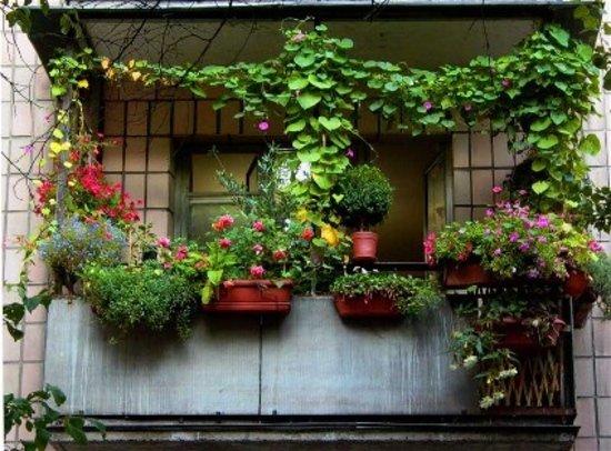 kak-podobrat-cveti-dlya-balkona (4)570b4dcdea325
