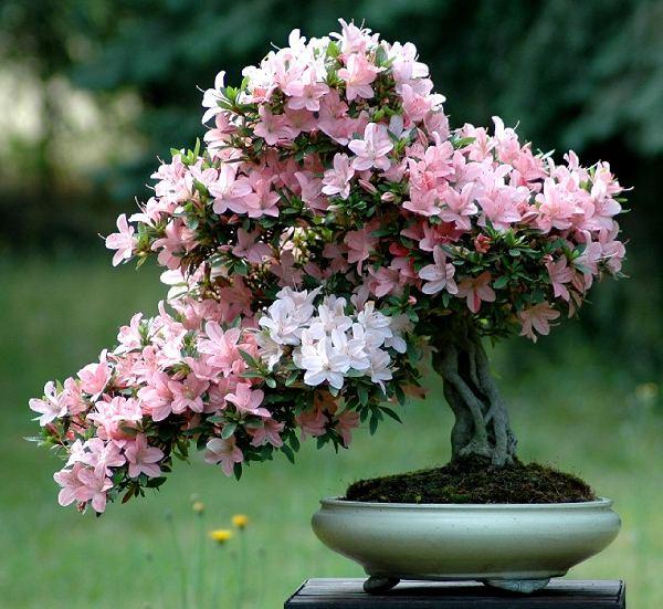 фэн-шуй цветы