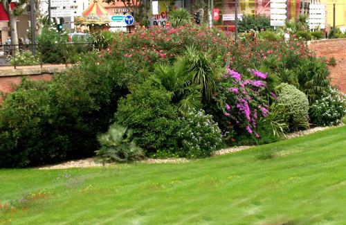 групповые посадки деревьев