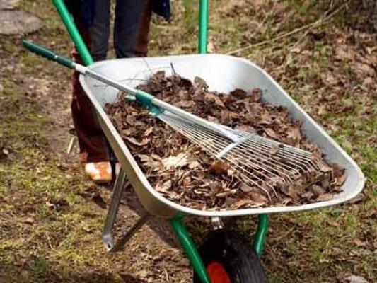 почва для растений