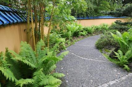 декоратинво-лиственные растения