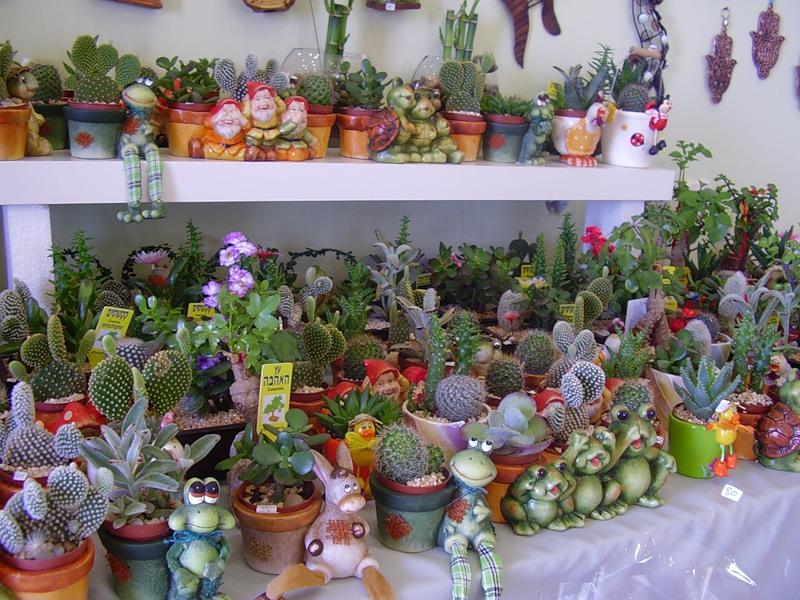 покупка кактусов
