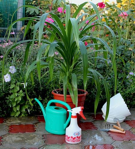 Поливаем цветы