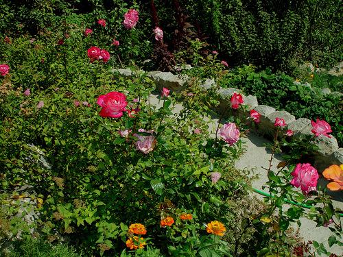 Как построить сад?