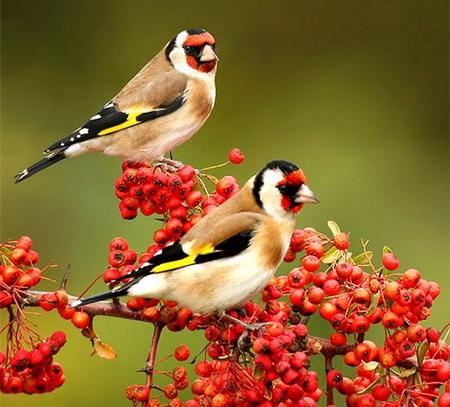 bird-love-p1-05