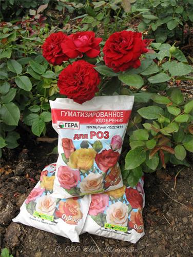 Основные виды удобрений для роз
