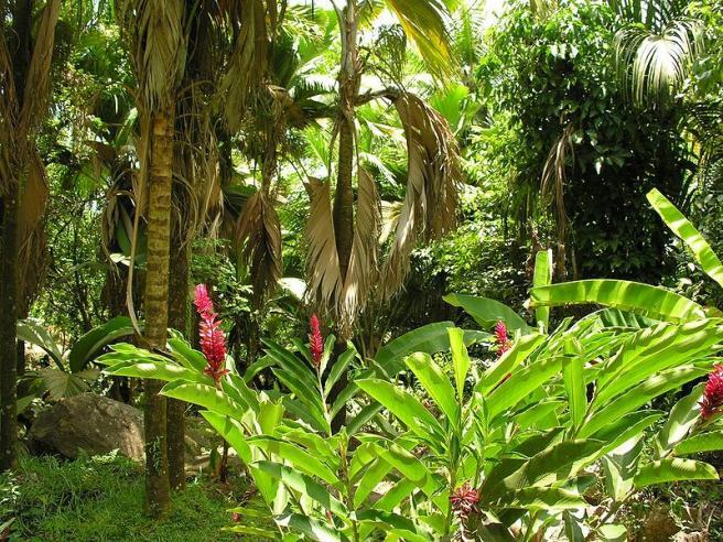 Растительный мир тропического леса
